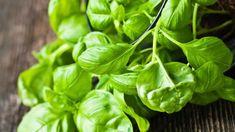 Máte letos díky slunnému a teplému počasí obzvláště velkou úrodu bazalky? Pesto, Korn, Spinach, Herbs, Gardening, Vegetables, Health, Kitchen, Cooking