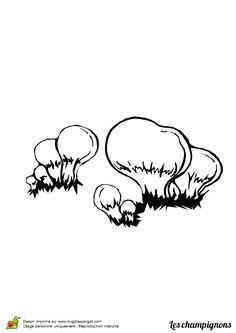 Coloriage / dessin champignon vesse de loup