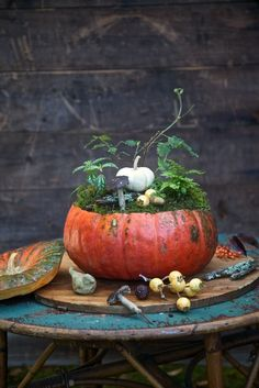 """My favorite pumpkins are the Cinderella varieties for their intense color and and size. They can be as large as 15"""" across. Last year when I was designing my pumpkin feature for the current Fall Country Gardnes 2014 magazine, this was on of my favorite projects. If you love gardening it's easy make your own little world in a pumpkin."""