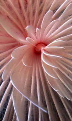 ...I think this is a tube worm. I think.