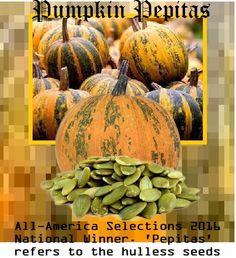 Pumpkin Pepitas