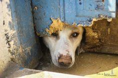 dog shelter - Egypt  pets in frames photography  #facebookpage