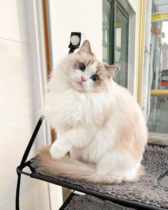 Feline Avenue, shop for cats and cat lovers Check the link in our bio️ Worldwi… Ragdoll Kittens, Cute Cats And Kittens, I Love Cats, Crazy Cats, Kittens Cutest Baby, Funny Kittens, Adorable Kittens, Cute Cat Gif, Cute Funny Animals