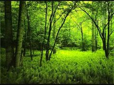 Morning in the forest - over one hour of relaxing forest sounds-love  listening to this going to bed.
