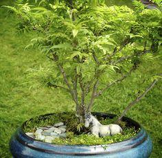 Miniature Garden Plants - Dwarf Wisteria -  #miniaturegarden http://minigardener.wordpress.com/2013/04/11/miniature-garden-plants-examples-of-what-to-look-for/