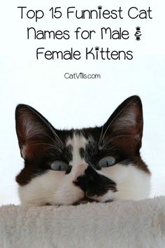 Looking For Some Of The Funniest Cat Names Your New Kitten We Ve