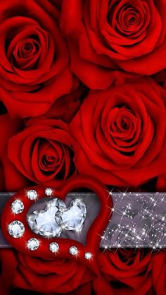 ♥RED ROSES