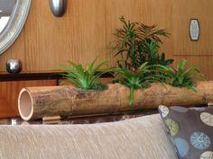 Tropical decor using bamboo and bromeliads.