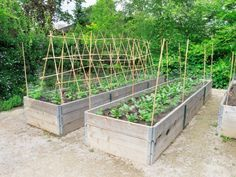 Organic Gardening Supplies Near Me Raised Vegetable Gardens, Vegetable Garden Design, Building A Raised Garden, Raised Garden Beds, Raised Bed, Fruit Garden, Gardening Supplies, Flower Farm, Plantation