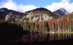 Image result for north america forest
