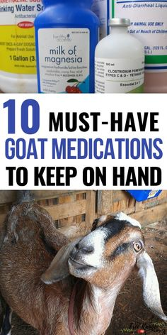 Raising Goats: Are you prepared if your goat gets sick? Get this list of medications you should always have on hand from The Free Range . Raising Farm Animals, Raising Goats, Goat Playground, Playground Ideas, Keeping Goats, Goat Shelter, Goat Pen, Show Goats, Nubian Goat