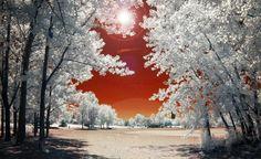 fotografia infravermelho  HDR natureza paisagem