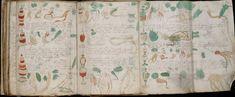 Ein Rezept aus dem 17. Jahrhundert hat allen Frauen in dieser Stadt die Jugend zurückgebracht!