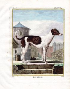 """"""" le Matin """" ,1766. Copper engraving, Antique Hand Colored Print, Buffon Natural History. Measures 10 x 8 inches. 27 x 22 cm."""