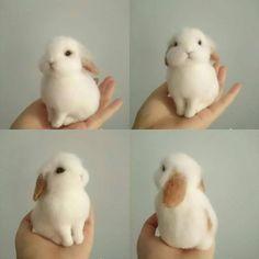 #rabbit #zajačik #cute ❤️❤️