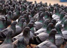 Não é fofa a senhorinha alimentando esses 89 pombos na praça da Sé?   30 coisas que você nunca vai ouvir de um paulistano