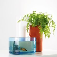 Contemporary Indoor Ponds for Fishes and Plants