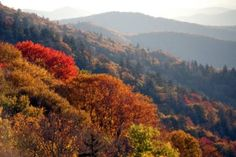 Fall leaves in the Smoky Mountains