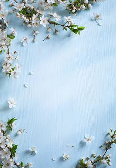 art spring border background with white blossom
