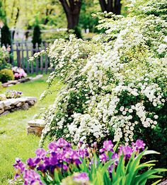 Spirea - looks like bridal wreath, may be good for front yard, especially as corner anchors.  Need to make sure we prune this one when its not in bloom.