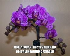 Help Make Your Garden Special - Easy Garden Plants Moth Orchid, Phalaenopsis Orchid, All Flowers, Beautiful Flowers, Blooming Orchid, Covered Garden, Happy Birthday Images, Easy Garden, Garden Crafts