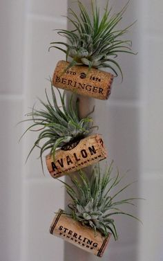 Ingenious wine cork planters for your little plants - Garden Wine Craft, Wine Cork Crafts, Wine Bottle Crafts, Crafts With Corks, Diy With Corks, Stick Crafts, Air Plant Display, Plant Decor, Wine Cork Projects