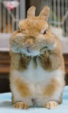 Funny bunny @repost from FB