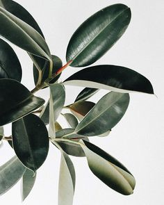 How to Decorate with Plants without a Green Thumb