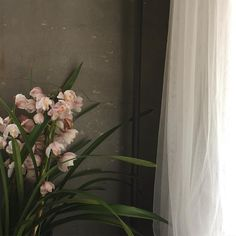 'i think, therefore i am' Flower Aesthetic, White Aesthetic, Flower Phone Wallpaper, Posh Girl, Floral Bouquets, Aesthetic Pictures, Flower Power, Beautiful Flowers, Fresh Flowers