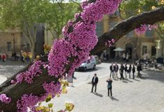 Avignon in springtime. Or anywhere in France. At any time, really.