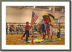 Horse Obstacle Course|Curly Horses