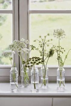 Arrangement of Queen Anne's lace