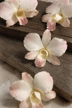 White Blush Orchids Natural  Preserved  Flowers (30 flowers) 30 for $14  alternative to gardenias - could be in bridesmaid hair, corsages, boutonnieres