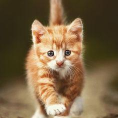 Ain't I looking clever? #cat #cats #catsagram #catstagram #instagood #kitten…