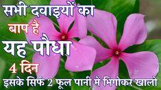 Heart Blockage, Heart Burn, Baba Ramdev, Low Blood Pressure, Boost Immune System, Home Treatment, Healthy Shakes, Diabetes Treatment, Ayurveda