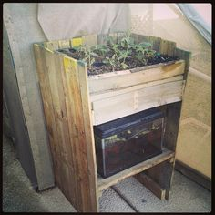 Recycled pallets in to aquaponic grow system. We are growing lettuce and tomatoes with tilapia fish!