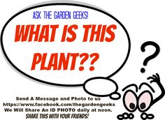 Plant ID? Ask The Garden Geeks