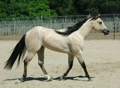 Horses are some of the world's most beautiful and astonishing animals. We've seen their strong...Read More »