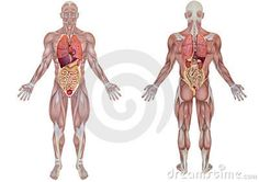 Je lichaam
