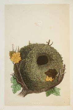 Wren Nest & Eggs Reverend Morris 1800s Original by PaperPopinjay