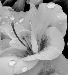 White Raindrops by Kathleen Mendel - 2012/2013 1st Place Black & White Print  TCCC