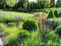 Po mojemu. Ogród subiektywnie świadomy. - strona 88 - Forum ogrodnicze - Ogrodowisko