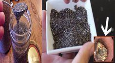 AVISO! Lo que tienes que saber antes de consumir la famosa chía. - TuSalud.Info