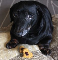 Top 10 Yummy Meatless Doggy Treat Recipes