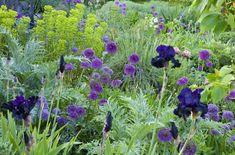 My favorite plant combinations 36 - Garden Decoration Beautiful Flowers Garden, Beautiful Gardens, Mediterranean Garden Design, Garden Pictures, Garden Borders, Natural Garden, Types Of Flowers, Plant Design, Garden Planning