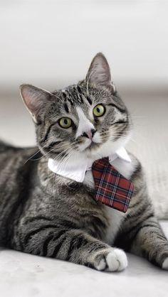 Милый котенок в галстуке iPhone 5 (5S) (5C) обои - 640x1136