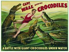 Captain Wall & his Crocodiles 1920s Vintage Circus Sideshow Posters & Prints. Crocodile Fighter table