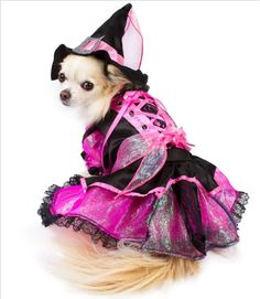 """Shiny Pink Witch Costume For Dogs - Size 2 (9.25"""" l x 12"""" - 14"""" g) Puppe Love http://www.amazon.com/dp/B009LRN942/ref=cm_sw_r_pi_dp_twgOwb1BXGC0R"""
