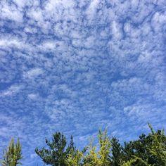 오늘 하늘이 참 좋구나