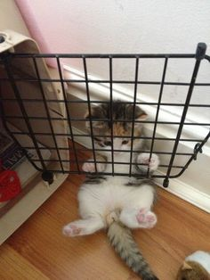 """""""I'm in a timeout"""""""